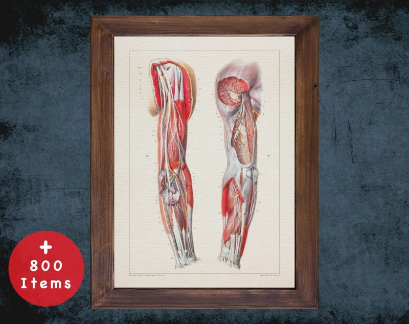 Anatomy art, ARM MUSCLE NERVES, medical student gift, therapist and Physical therapy, doctor office decor
