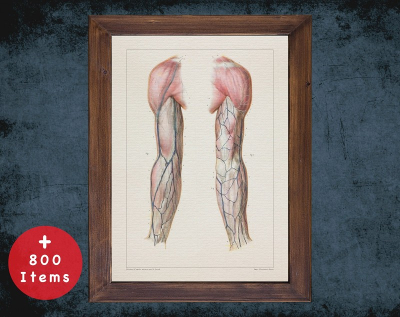 Anatomy art, UNDER SKIN VEIN, medical student gift, therapist and Physical therapy, doctor office decor