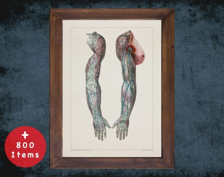 Anatomy art, SHOULDER VEIN ARM, medical student gift, Vessel blood and Vascular surgery, doctor office decor