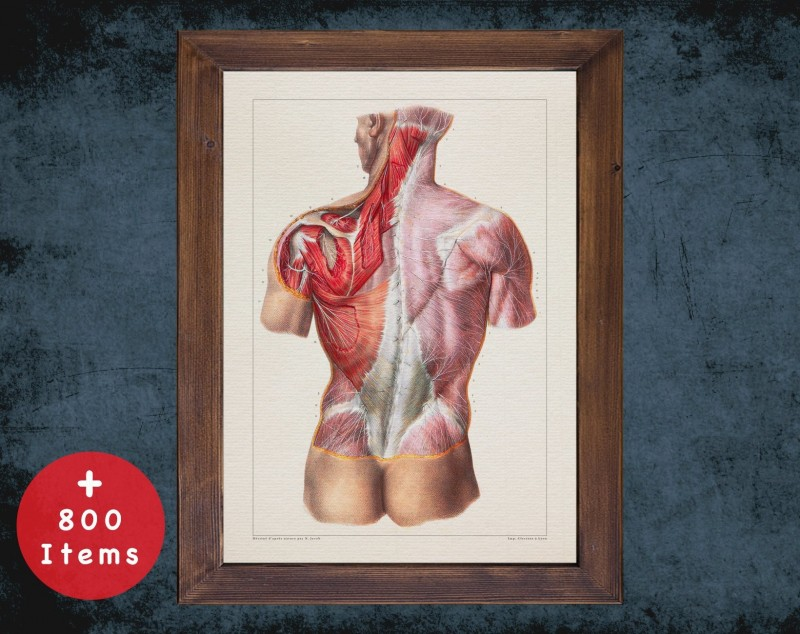 Anatomy art, TORSO NERVES SYSTEM, medical student gift, therapist and Physical therapy, doctor office decor