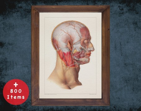 Anatomy art, HEAD NERVOUS SYSTEM, medical student gift, therapist and Physical therapy, doctor office decor