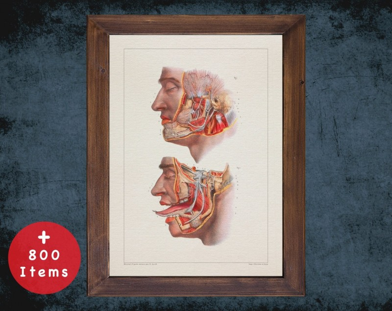 Anatomy art, JAW NERVOUS SYSTEM, medical student gift, therapist and Physical therapy, doctor office decor