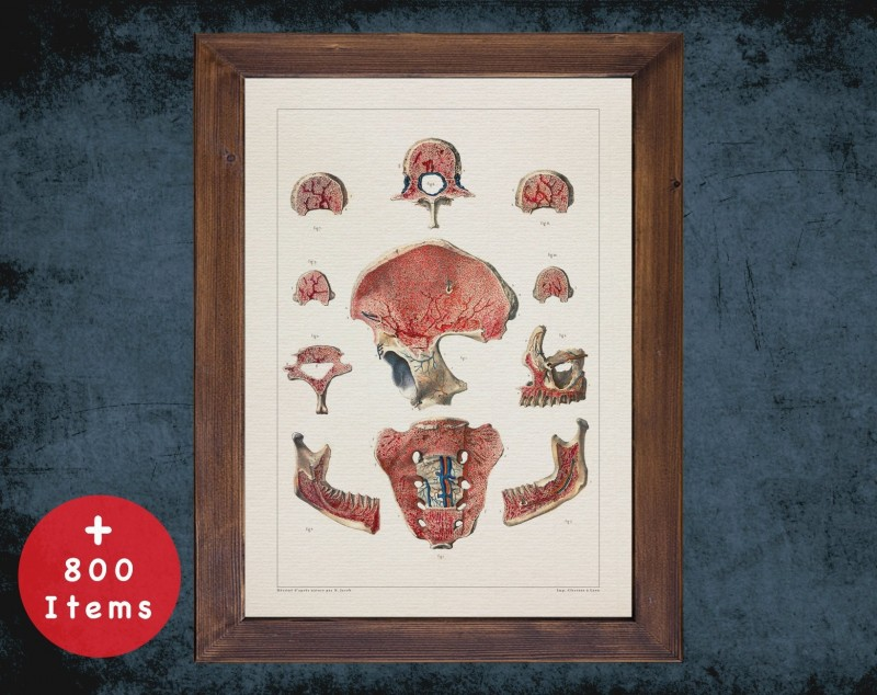 Anatomy art, BONES BLOOD SYSTEM, medical student gift, therapist and Physical therapy, doctor office decor