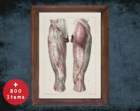 Anatomy art, VASCULAR LEG KNEE, medical student gift, therapist and Physical therapy, doctor office decor