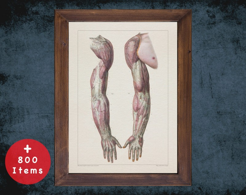 Anatomy art, ARMS FOREARM MUSCLE, medical student gift, therapist and Physical therapy, doctor office decor