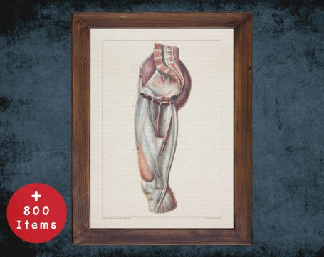 Anatomy art, LEG KNEE JOINT, medical student gift, therapist and Physical therapy, doctor office decor