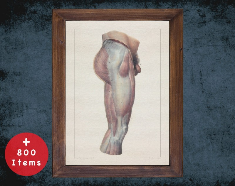 Anatomy art, LEG KNEE LIGAMENT, medical student gift, therapist and Physical therapy, doctor office decor