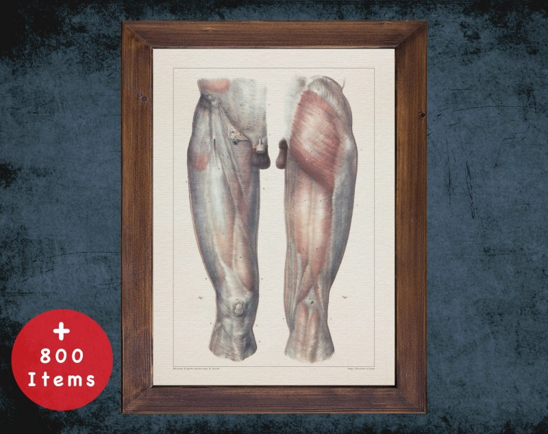 Anatomy art, LEG KNEE MUSCLE, medical student gift, therapist and Physical therapy, doctor office decor