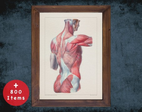 Anatomy art, BACK MUSCLE SHOULDER, medical student gift, therapist and Physical therapy, doctor office decor