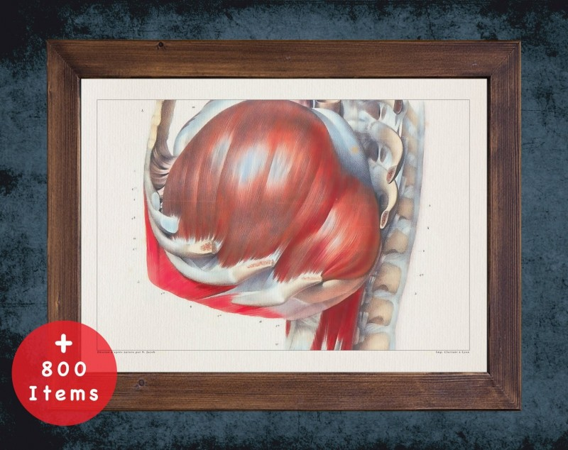 Anatomy art, DIAPHRAGM LATERAL VIEW, medical student gift, therapist and Physical therapy, doctor office decor