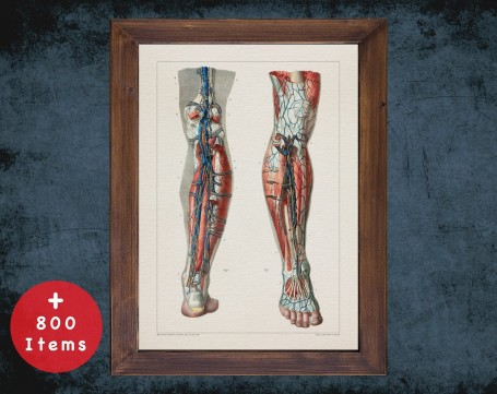 Anatomy art, LYMPH NODE LEG, medical student gift, Vessel blood and Vascular surgery, doctor office decor