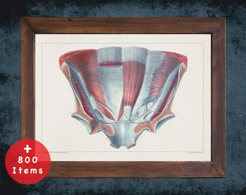 Anatomy art, PELVIS HIP BACK, medical student gift, therapist and Physical therapy, doctor office decor