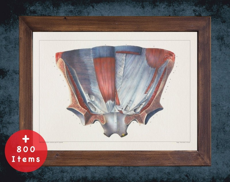 Anatomy art, PELVIS HIP BONES, medical student gift, therapist and Physical therapy, doctor office decor