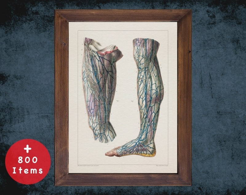 Anatomy art, LEG THIGH ARTERY, medical student gift, Vessel blood and Vascular surgery, doctor office decor