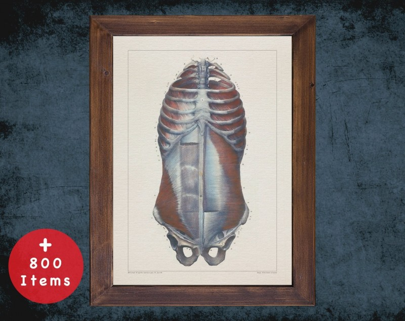 Anatomy art, CHEST STERNUM BONE, medical student gift, therapist and Physical therapy, doctor office decor