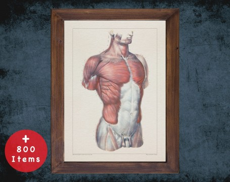 Anatomy art, PECTORAL TORSO MUSCLE, medical student gift, therapist and Physical therapy, doctor office decor