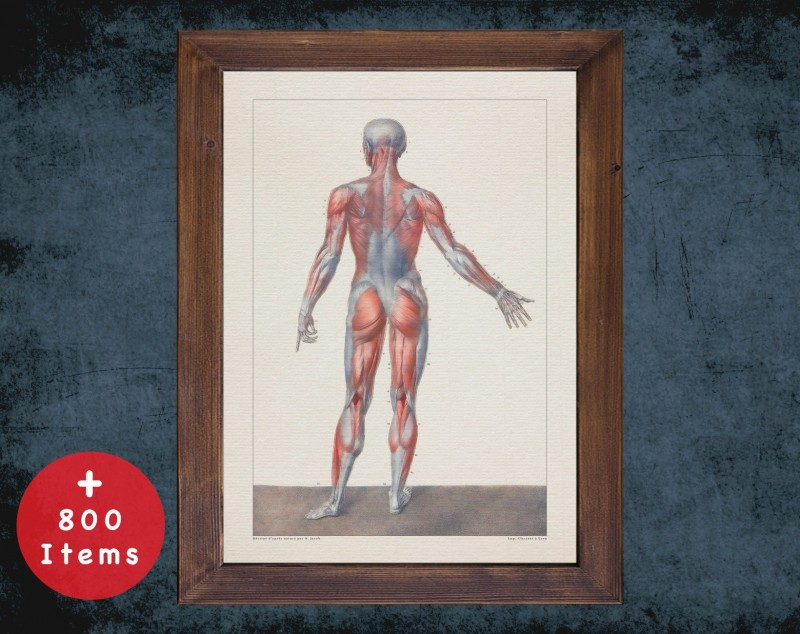 Anatomy art, HUMAN BODY BACK, medical student gift, therapist and Physical therapy, doctor office decor