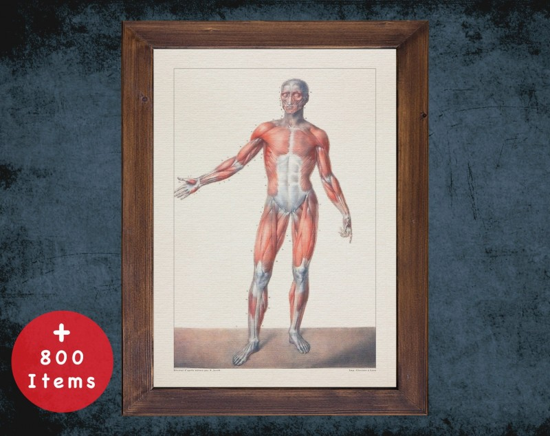 Anatomy art, HUMAN BODY MUSCLE, medical student gift, therapist and Physical therapy, doctor office decor