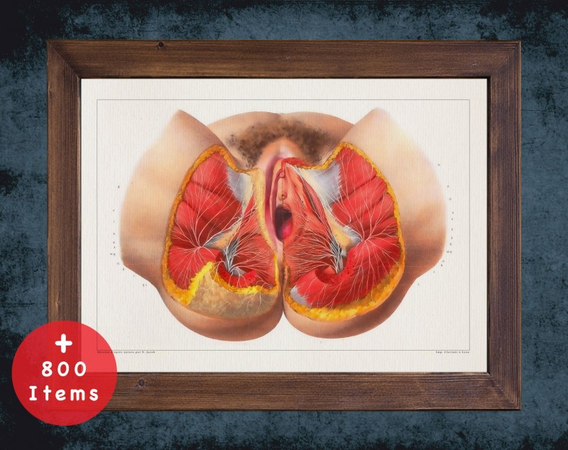 Anatomy art, PERINEUM NERVE WOMEN, medical student gift, Gynecologist and Gynecology, doctor office decor