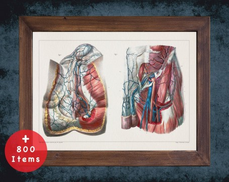 Anatomy art, PERINEUM GROIN ARTERY, medical student gift, Vessel blood and Vascular surgery, doctor office decor