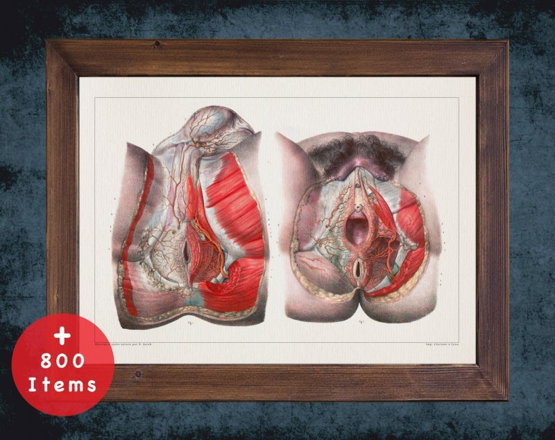 Anatomy art, MUSCLE ANUS VAGINA, medical student gift, Gynecologist and Gynecology, doctor office decor