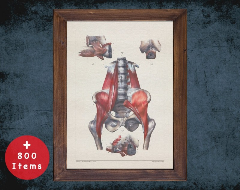 Anatomy art, PELVIS MUSCLE SPINE, medical student gift, Gynecologist and Gynecology, doctor office decor