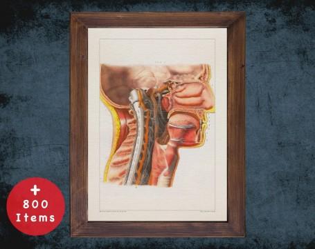 Anatomy art, OTORHINOLARYNGOLOGY NOSE MOUTH, medical student gift, Otolaryngologist and ent, doctor office decor