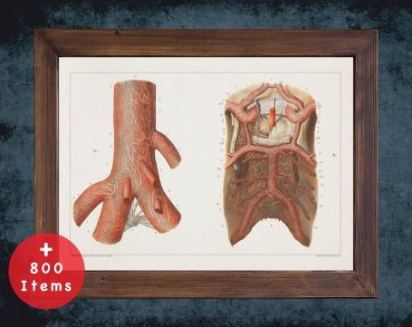 Anatomy art, TRACHEA LARYNX ARTERY, medical student gift, Otolaryngologist and ent, doctor office decor