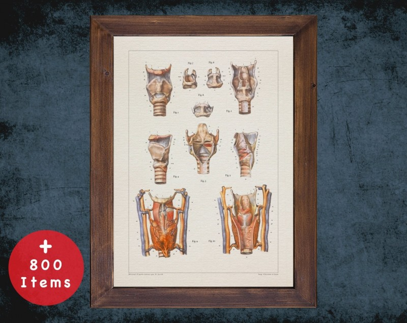 Anatomy art, LARYNX TRACHEA ESOPHAGUS, medical student gift, Otolaryngologist and ent, doctor office decor