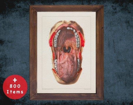 Anatomy art, MOUTH TEETH TONGUE, medical student gift, Otolaryngologist and ent, doctor office decor