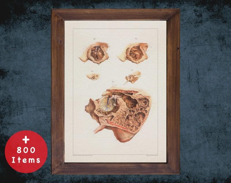 Anatomy art, EARDRUM TYMPANIC MEMBRANE, medical student gift, Otolaryngologist and ent, doctor office decor