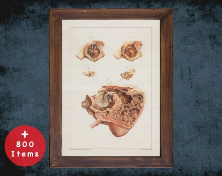 Anatomy art, EARDRUM TYMPANIC MEMBRANE, medical student gift, Otolaryngologist and ent, doctor office decor