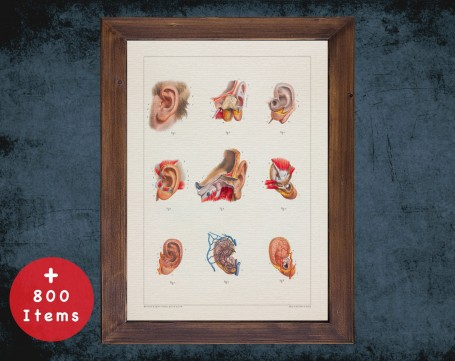 Anatomy art, EAR MUSCLE VEIN, medical student gift, Otolaryngologist and ent, doctor office decor
