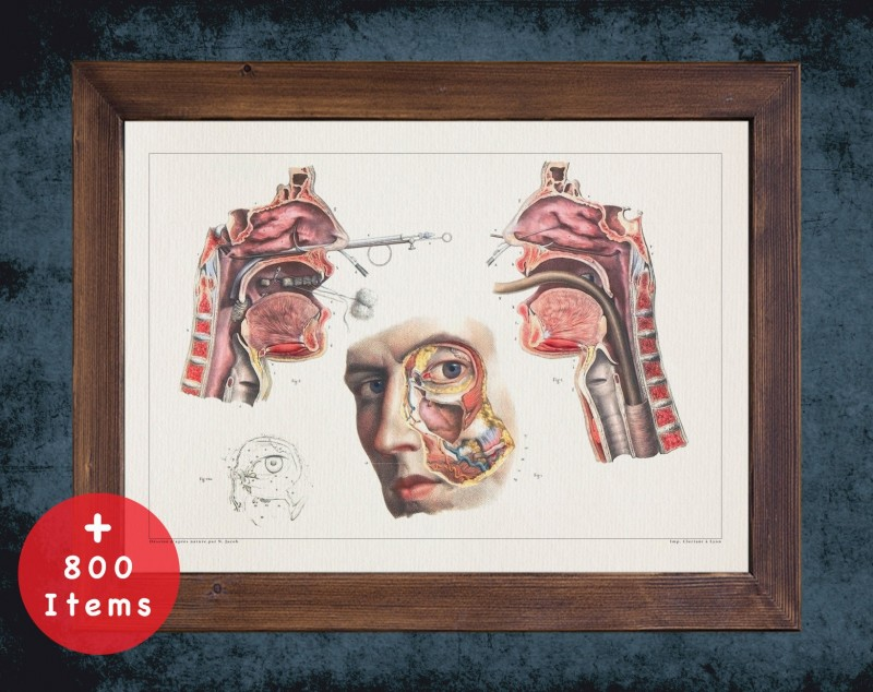 Anatomy art, NASAL CAVITY MOUTH, medical student gift, Otolaryngologist and ent, doctor office decor