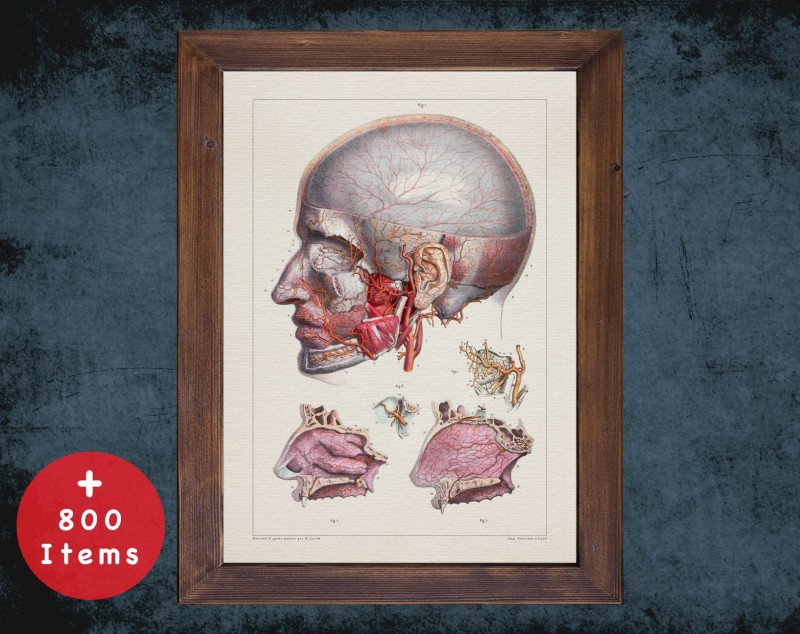 Anatomy art, EAR JAW VEIN, medical student gift, Otolaryngologist and ent, doctor office decor