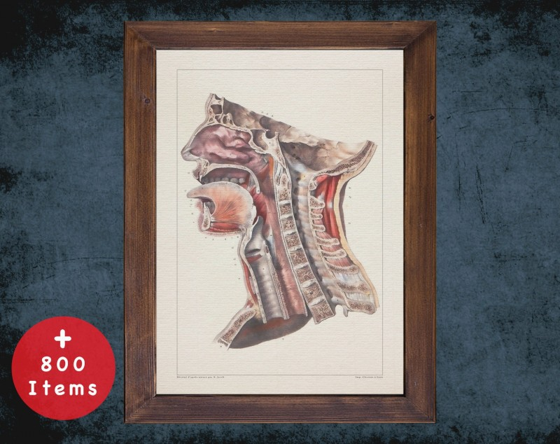 Anatomy art, LARYNX SPINE TRACHEA, medical student gift, Otolaryngologist and ent, doctor office decor