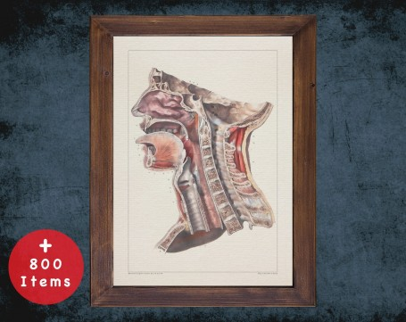 Anatomy art, LARYNX SPINE TRACHEA, medical student gift, Otolaryngologist and ent, doctor office decor