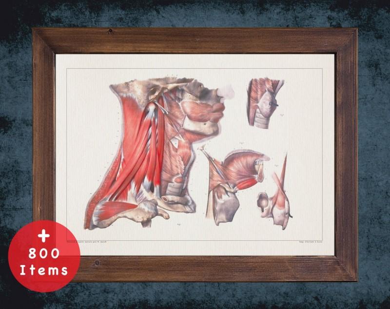Anatomy art, THROAT LARYNX TRACHEA, medical student gift, Otolaryngologist and ent, doctor office decor