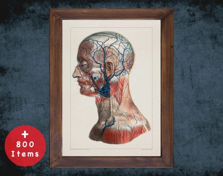 Anatomy art, NECK VEIN HEAD, medical student gift, Vessel blood and Vascular surgery, doctor office decor