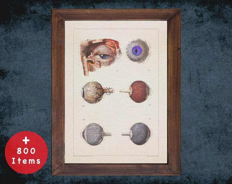 Anatomy art, EYEBALL OPTIC NERVE, medical student gift, Ophthalmologist and Optometry, doctor office decor