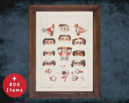 Anatomy art, STRABISMUS EYES SURGERY, medical student gift, Ophthalmologist and Optometry, doctor office decor