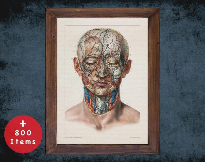 Anatomy art, CAROTID VEIN HEAD, medical student gift, Vessel blood and Vascular surgery, doctor office decor