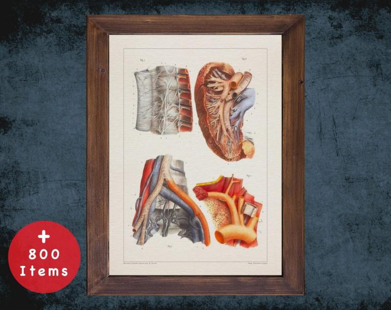 Anatomy art, KIDNEY NERVES ARTERY, medical student gift, Nephrologist and Nephrology, doctor office decor