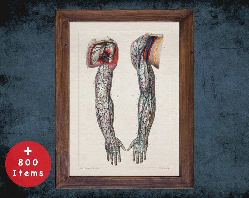Anatomy art, SUPERFICIAL VEIN ARM, medical student gift, Vessel blood and Vascular surgery, doctor office decor
