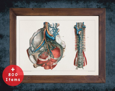 Anatomy art, LYMPHATIC SYSTEM GANGLION, medical student gift, Nephrologist and Nephrology, doctor office decor