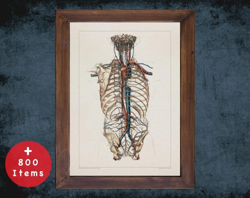 Anatomy art, VASCULAR SYSTEM ARTERY, medical student gift, Nephrologist and Nephrology, doctor office decor