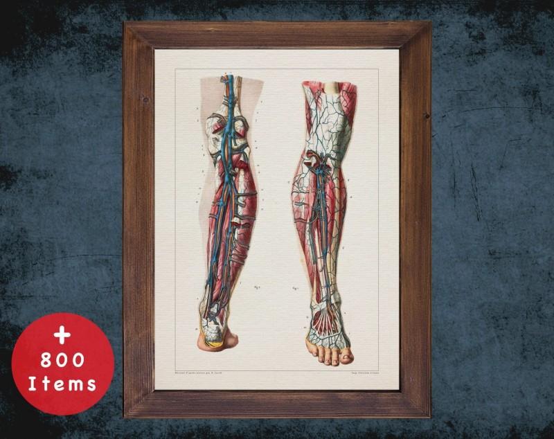 Anatomy art, VEIN LEG ARTERY, medical student gift, Vessel surgeon and Vascular surgery, doctor office decor