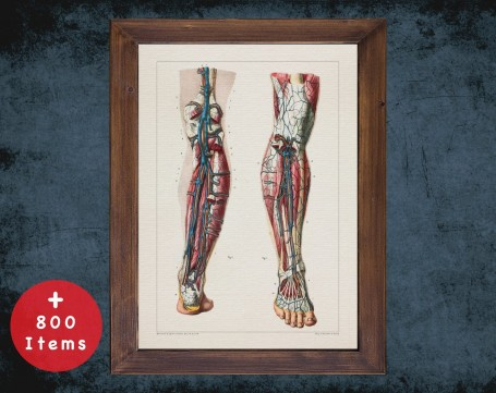 Anatomy art, VEIN LEG ARTERY, medical student gift, Vessel surgeon and Vascular surgery, doctor office decor
