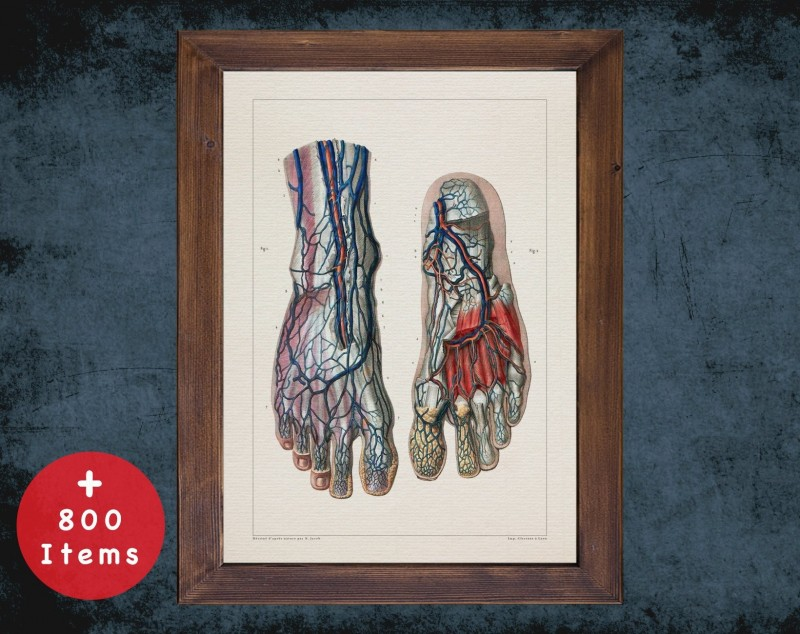 Anatomy art, VEIN FOOT ARTERY, medical student gift, Blood vessel and Vascular surgery, doctor office decor