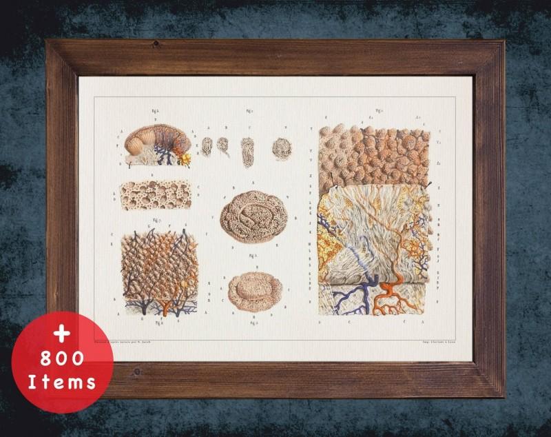 Anatomy art, SKIN TISSUE PORE, medical student gift, Dermatologist and Dermatology, doctor office decor